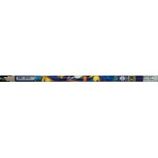 Карандаш графитовый EXOTIC HB, с ластиком, туба 20 шт., KIDS Line